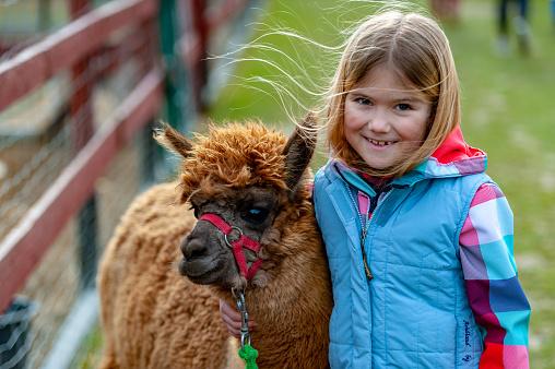 alpaca with a girl