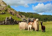 istock Alpacas at Sacsayhuamán - Cusco, Peru 482880419
