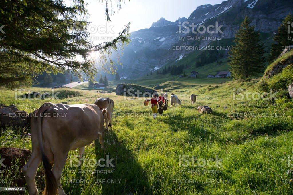 Alpaufahrt – Foto