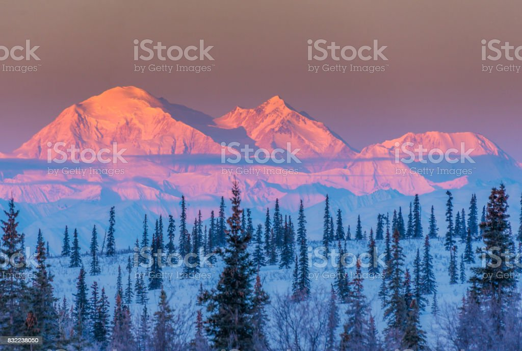 Alpen glow on Denali at sunrise stock photo