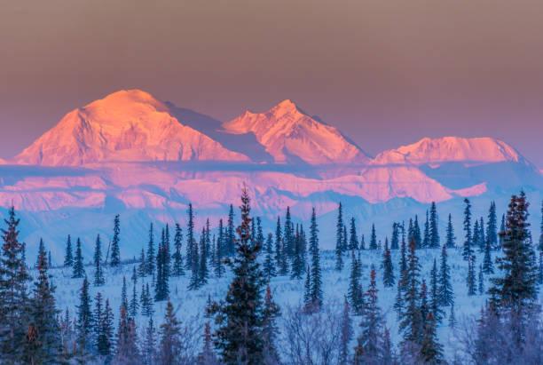 alpen glöd på denali vid soluppgången - denali national park bildbanksfoton och bilder