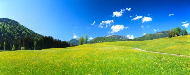 Alpen Landscape - Green Field Meadow full of spring flowers stock photo