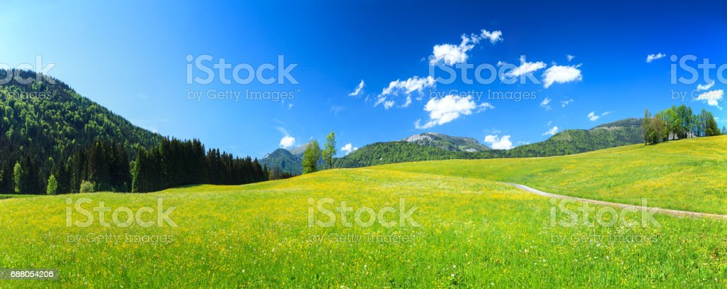 Alpen Landscape - Green Field Meadow full of spring flowers stock photo