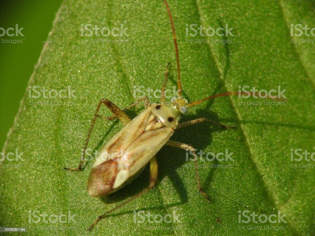 Alpha alpha bug stock photo