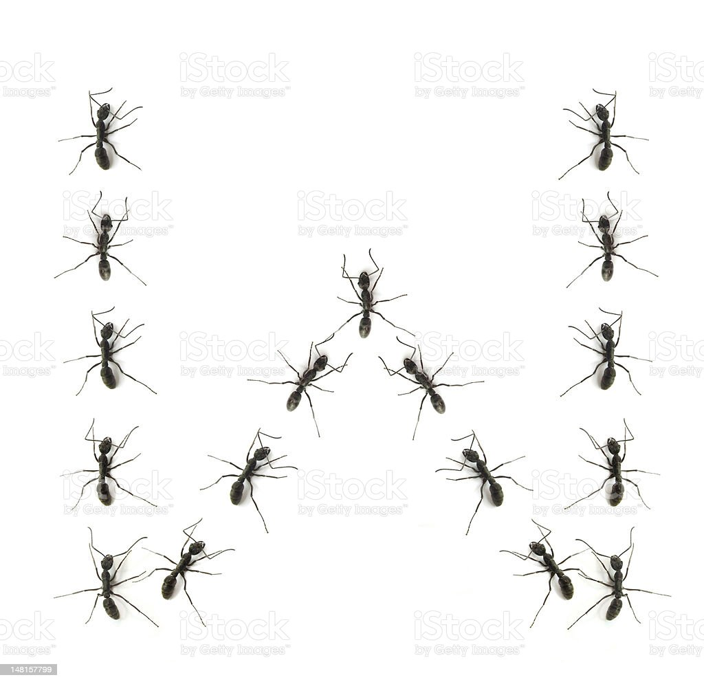 alphabet letters spelled by ant in line royalty-free stock photo