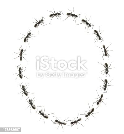 istock alphabet letters spelled by ant in line 178363697