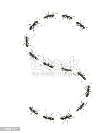 istock alphabet letters spelled by ant in line 178374471