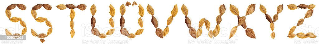 """Alphabet with leaves: """"S"""" to """"Z"""" royalty-free stock photo"""