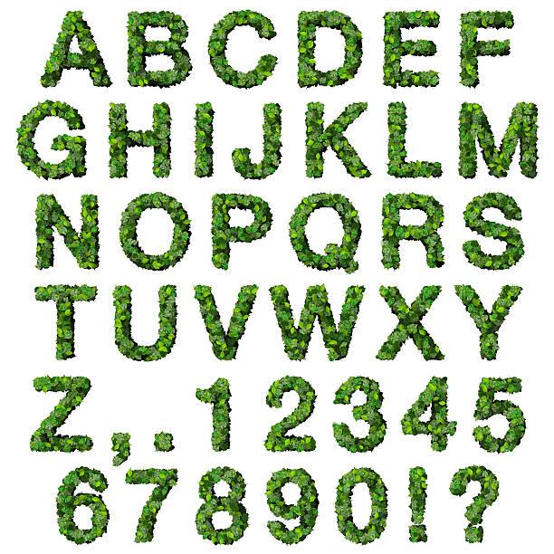 alphabet avec des numéros de feuilles vertes - buis photos et images de collection