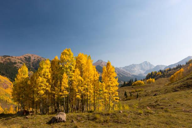 Alpine Aspen Scene stock photo