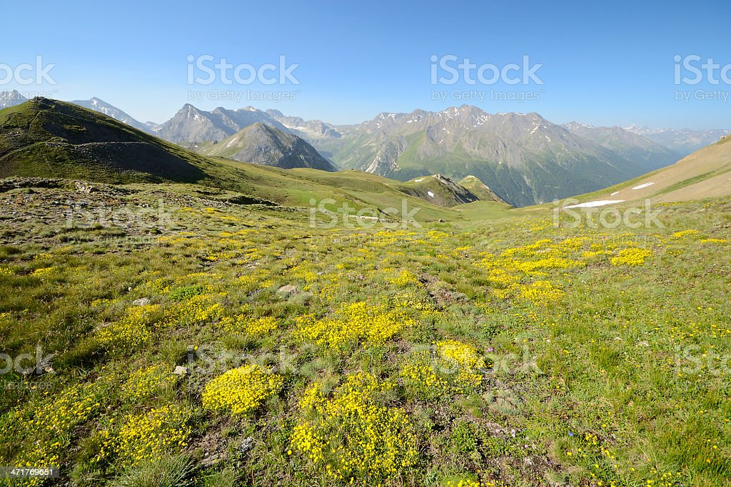 Alpine colors in summer royalty-free stock photo