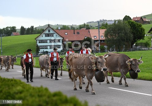 Weissbad, Appenzell, Switzerland. June 15st 2019. Four farmers in traditional Swiss costumes, bring the cows in a traditional procession called the \'Alpaufzug\' to the alpine pastures. The farmers start early in the morning at 2 o'clock and bring the cows to the alp, over the whole summer. In the background you can see the typical houses of Appenzell.