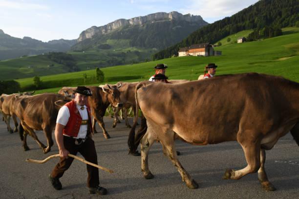 alpaufzug appenzell - patrick hutter stock-fotos und bilder