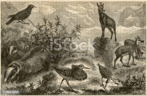 istock Alpine Fauna Collection 173944833