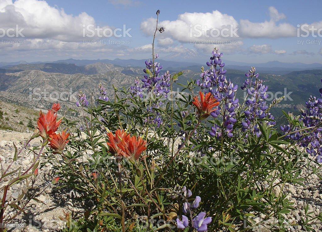 Alpine flowers royalty-free stock photo