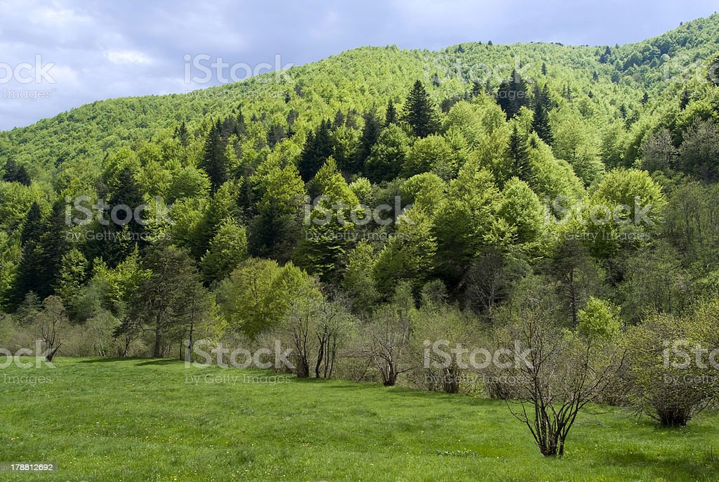 Alpine forest royalty-free stock photo