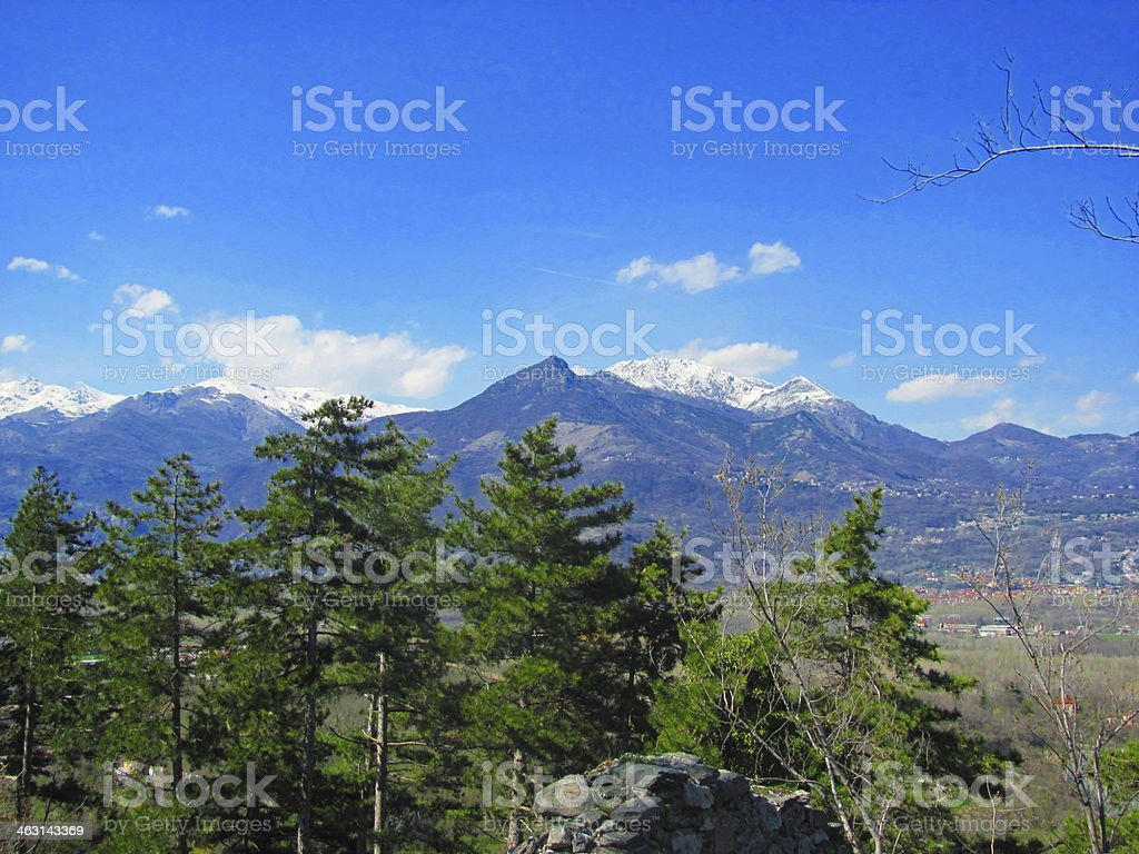 Alpin Forest stock photo