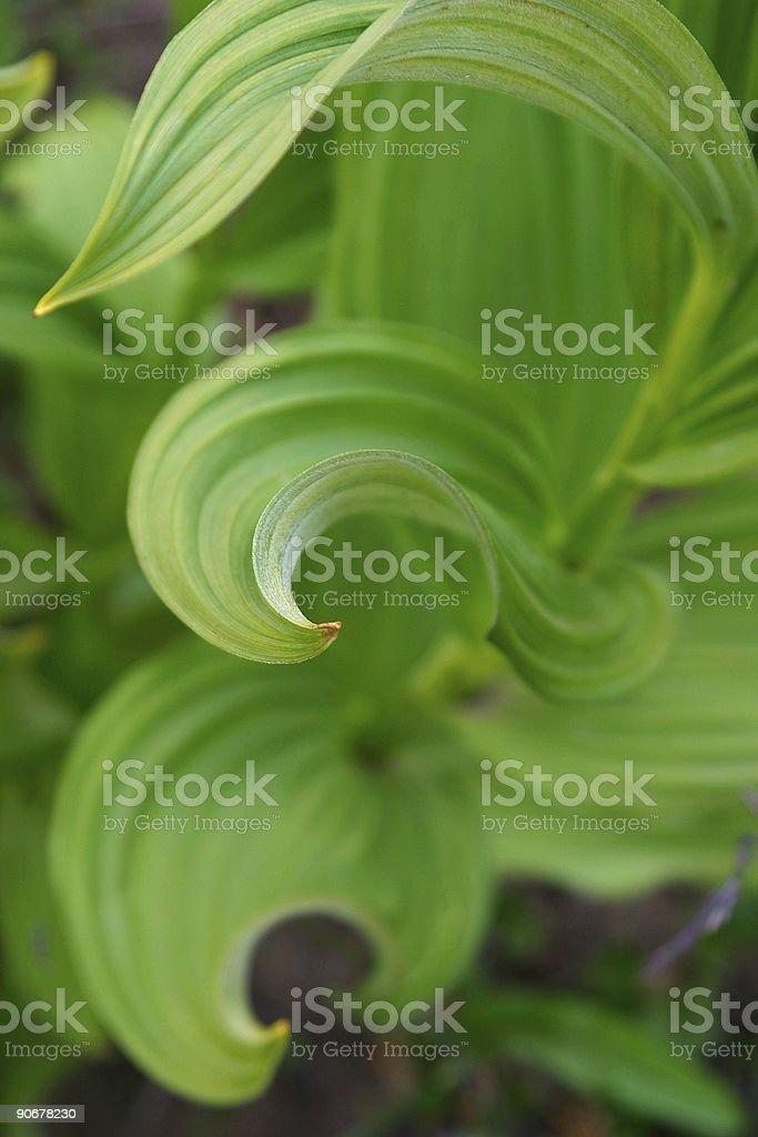 Alpine Green royalty-free stock photo