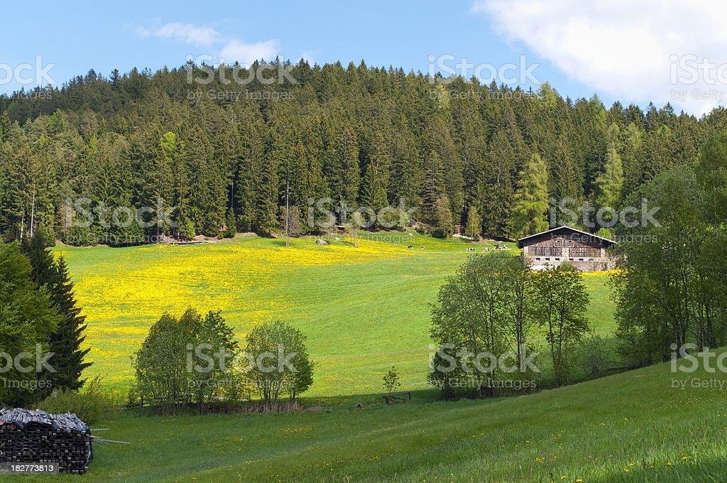 Alpine landscape in spring royalty-free stock photo