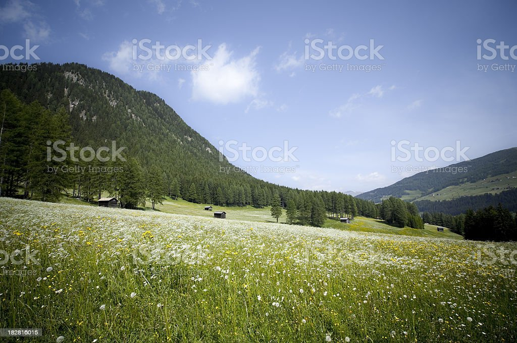 Alpine landscape in summer royalty-free stock photo