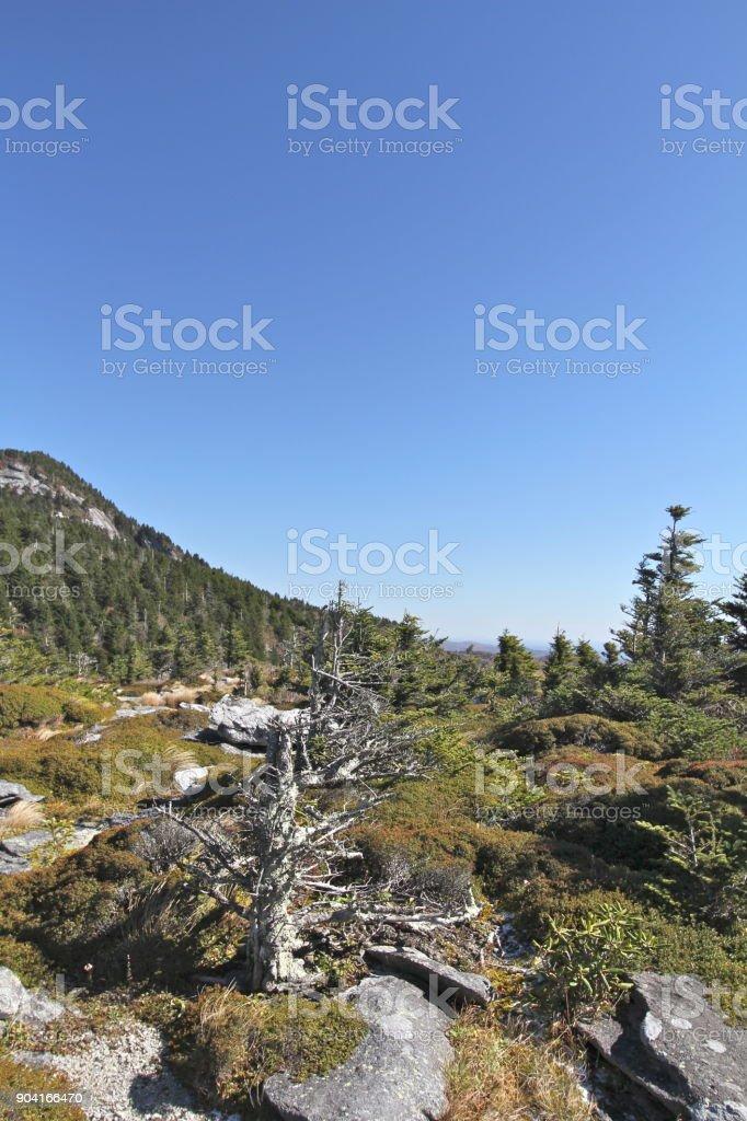 Alpine Landscape in the Blue Ridge Mountains stock photo