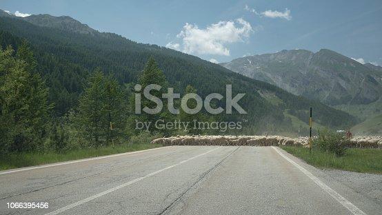 Sheep crossing a road