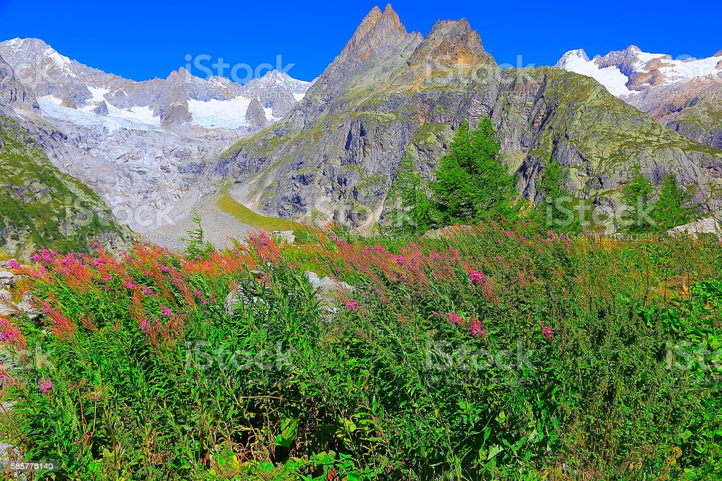 Alpine landscape, Mont Blanc pinnacles  - Swiss alps, Pink wildflowers stock photo