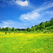 Green fields and mounatins in Berchtesgaden municipality, Bavaria, Germany