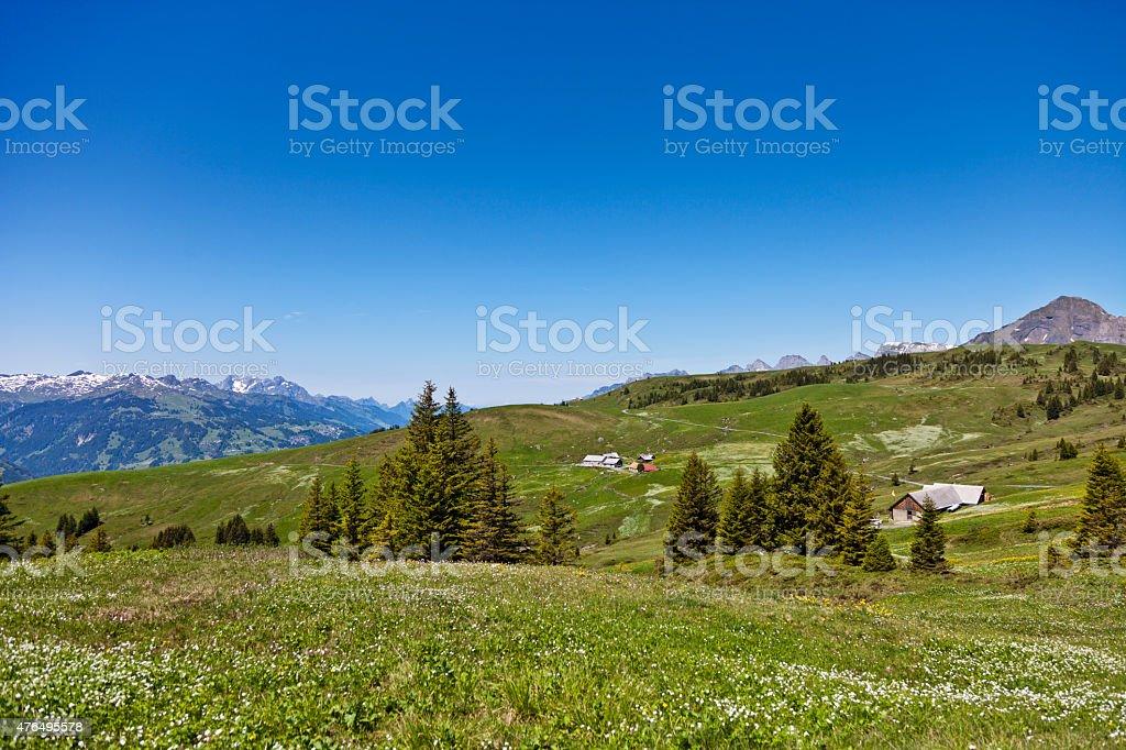 Alpine Meadow near Palfries stock photo