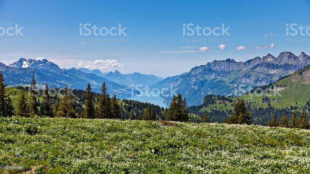 Alpine Meadow near Palfries with a View to Lake Walensee stock photo