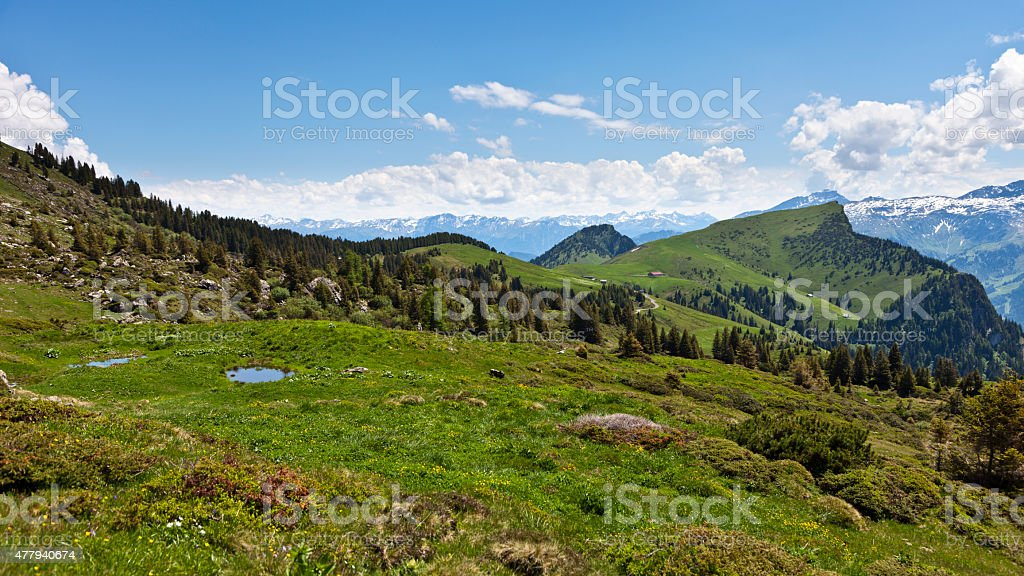 Alpine Meadow near Palfries with view to Hinterspina and Gonzen stock photo