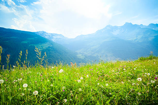 Montanha meadow - foto de acervo