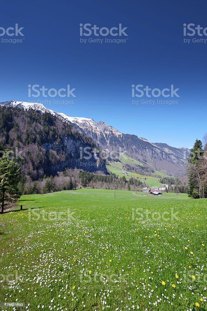 Alpine Meadow royalty-free stock photo