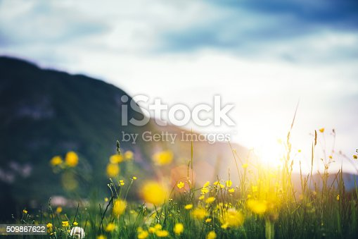 Summer meadow with yellow mountain flowers.