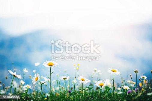 istock Alpine Meadow 534508553