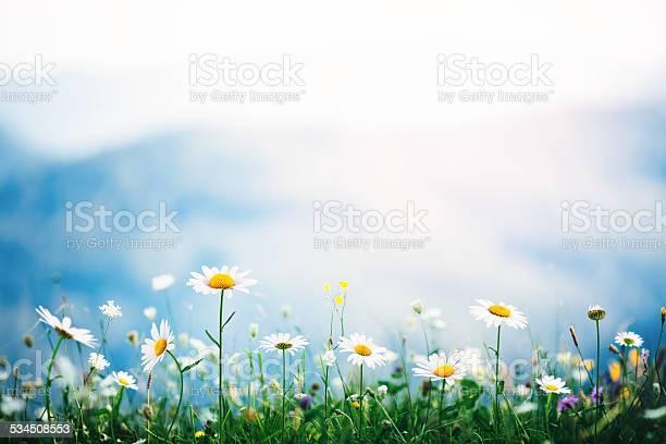 Alpine meadow picture id534508553?b=1&k=6&m=534508553&s=612x612&h=nr9aoshj1skirbr2 ktc8fqevuj7h2kj3ssfl7j8bju=