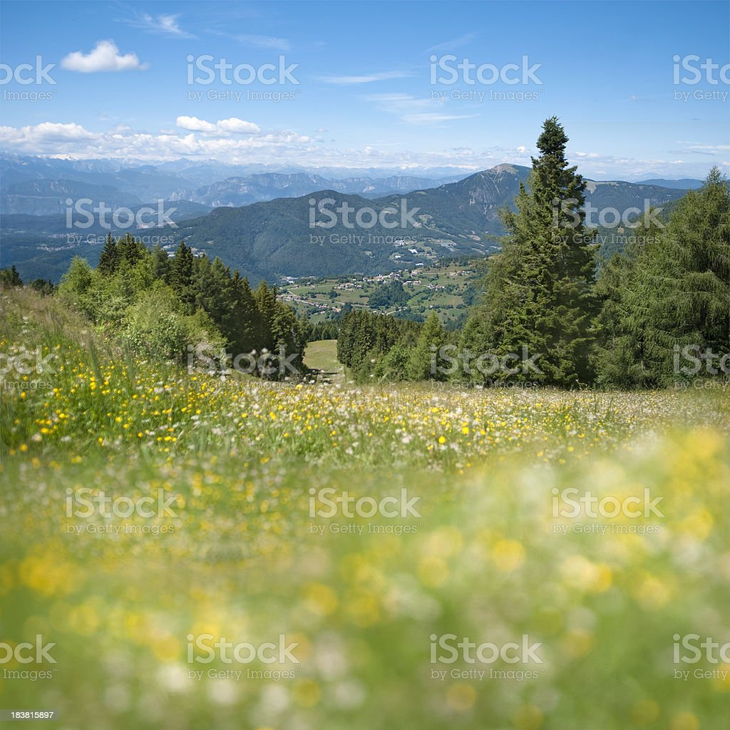 Alpine meadow | selective focus royalty-free stock photo