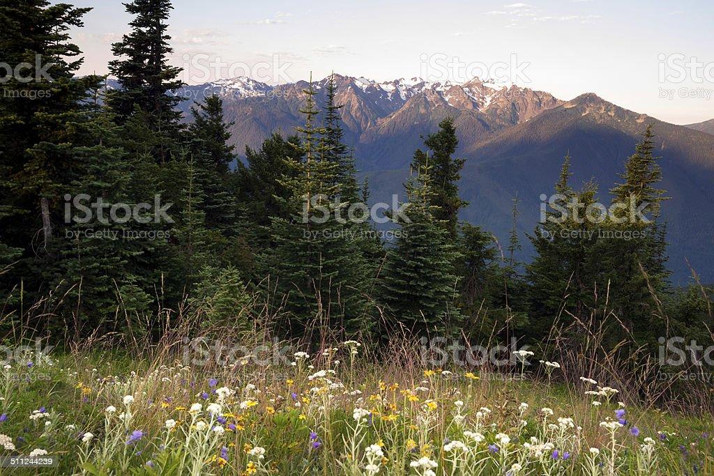 Bergwiesen voller Wildblumen, Hurricane Ridge Olympic Mountains – Foto