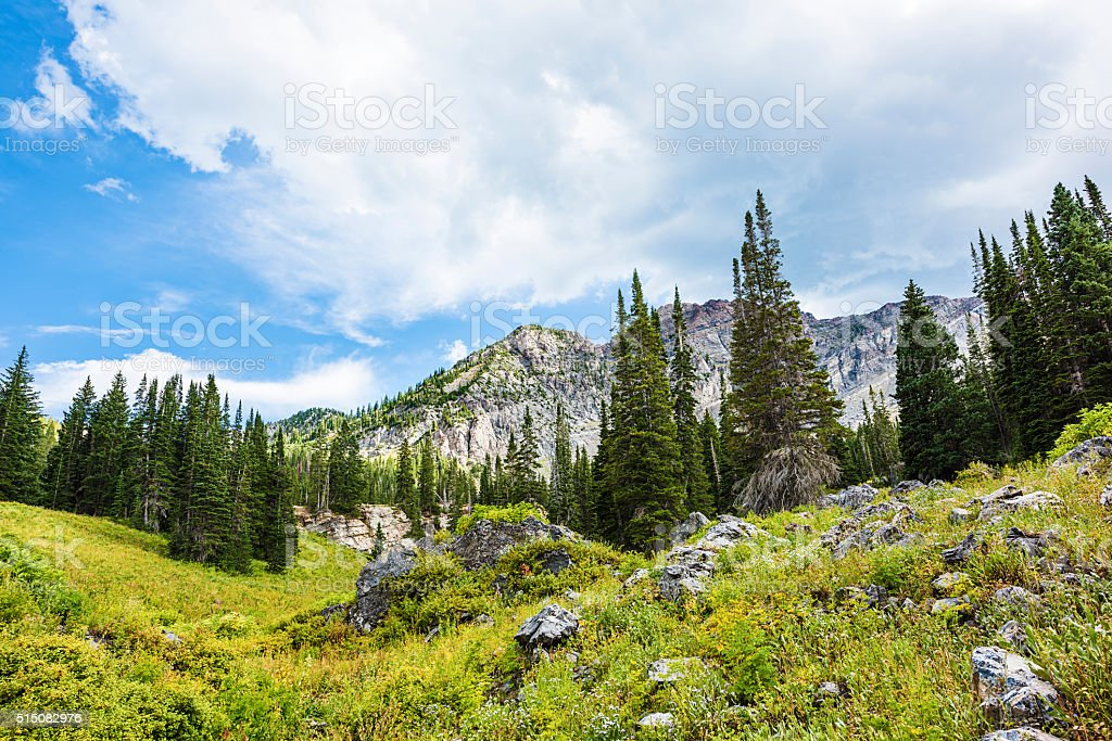 Alpine Meadows at Albion Basin, Utah stock photo
