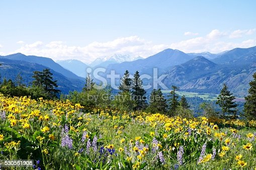 istock Alpine Meadows Filled with Wild Flowers and Snowcapped Mountains. 530561908