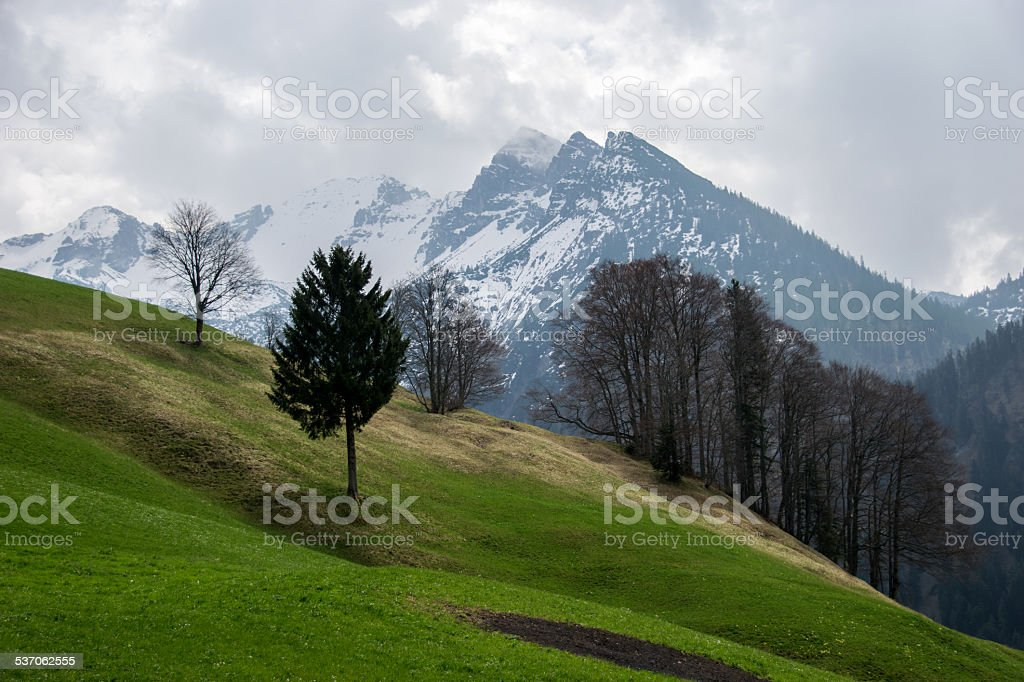 alpine mountain with green meadow stock photo