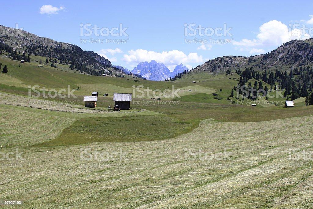 alpine pasture 4 royalty-free stock photo