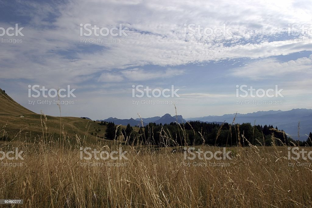 alpine pasture royalty-free stock photo