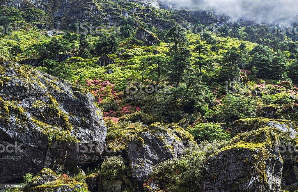 Alpine plants on mountain slopes, western Arunachal Pradesh, India. stock photo