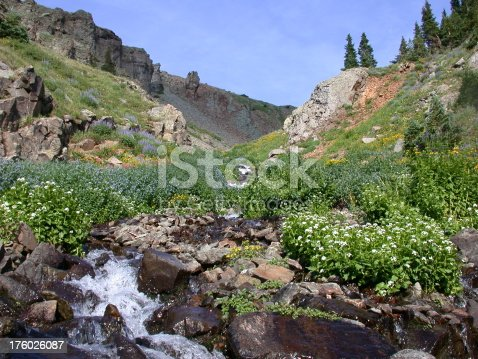 Wildflower lined river in the high country rocky mountains of colorado.