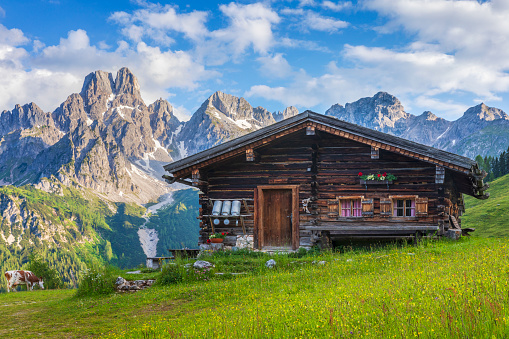 Wooden hut on Meadow by Mount Dachstein with Mount Bischofsmütze, Sulzenalm with cow in background