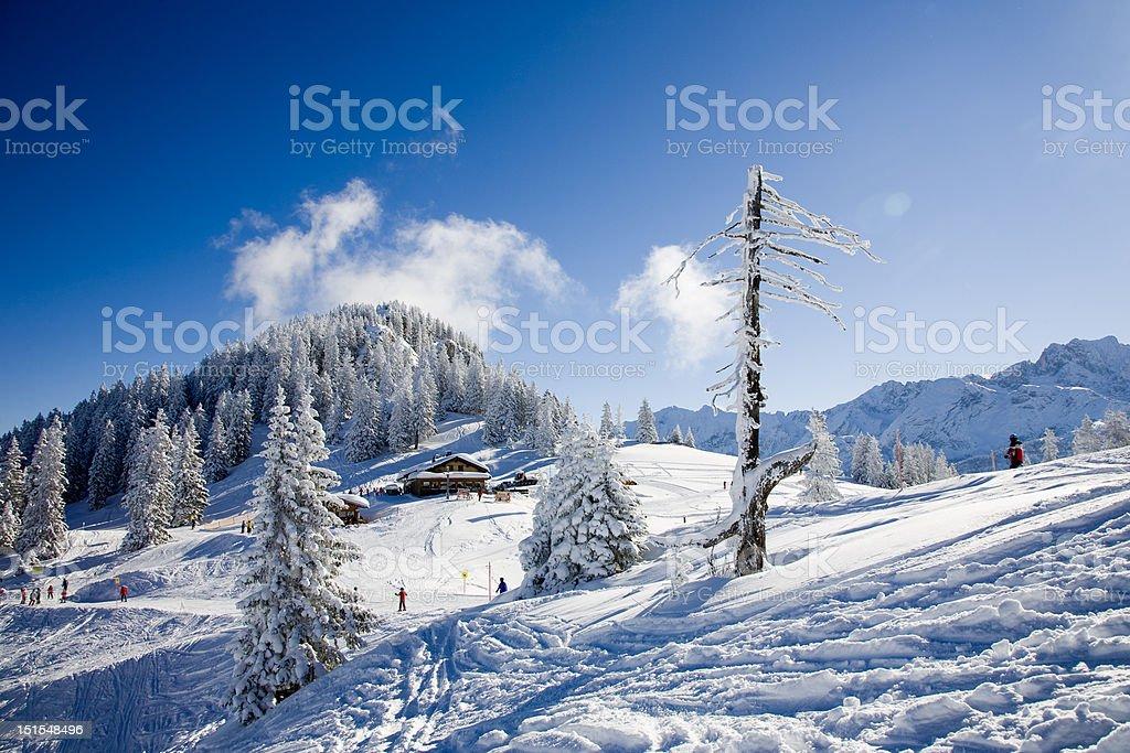 alpine skiing #3 royalty-free stock photo