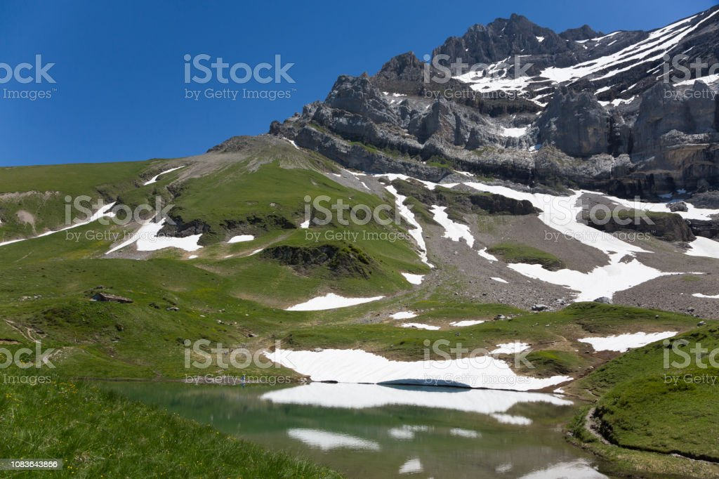 Alpine Snowbell At Dent Du Midi Mountains Stock Photo