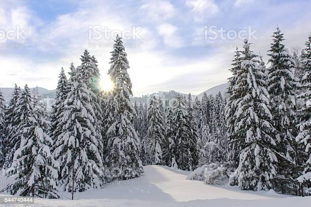 Alpine spruce forest in a sunny meadow picture id544740444?b=1&k=6&m=544740444&s=612x612&h=dkxhz2qiuakodfhygp9mr ntly5onxqrtu0p 4t2luw=