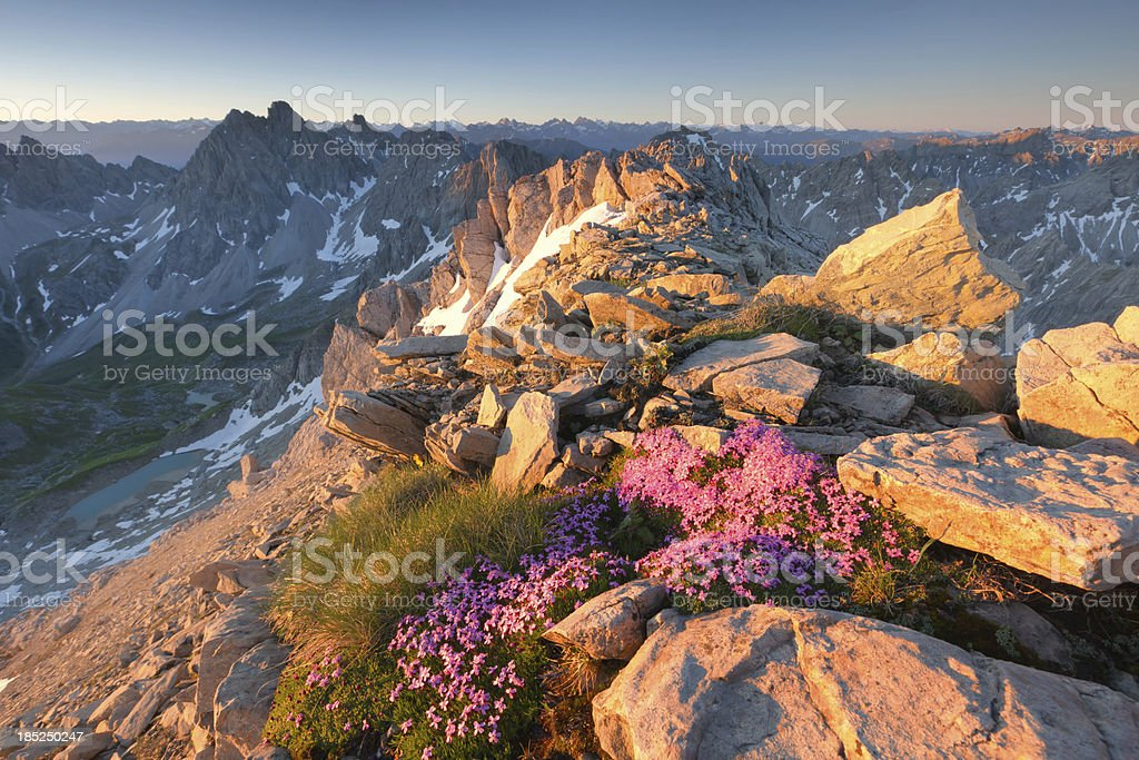 alpine sunrise with flowers in the foreground stock photo